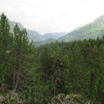 Maloja and Nature